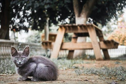 Free stock photo of ali meddah, animal, animal lover, animal photography