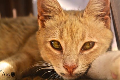 Free stock photo of Adobe Photoshop, algeria, ali meddah, animal