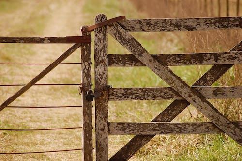 Δωρεάν στοκ φωτογραφιών με αγρόκτημα, αγροτικός, γκρο πλαν, γρασίδι