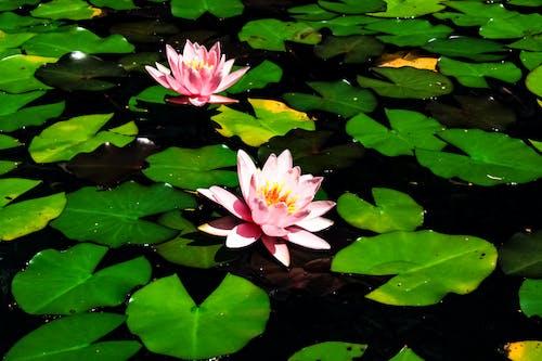 Immagine gratuita di biotopo, fiore, fotografia della natura, fotografia di paesaggio