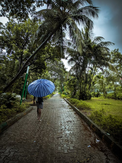 Person Holding a Umbrella
