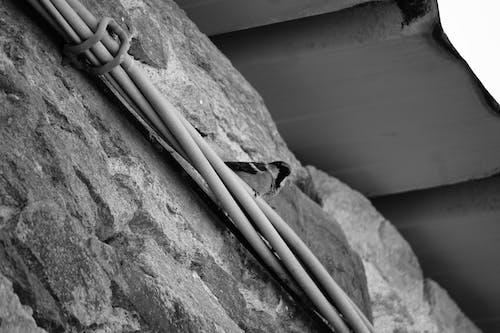 faune urbaine, とんと, エレクトリック, オイゾーの無料の写真素材