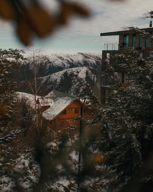 Foto d'estoc gratuïta de a l'aire lliure, arbres, arquitectura, cabana