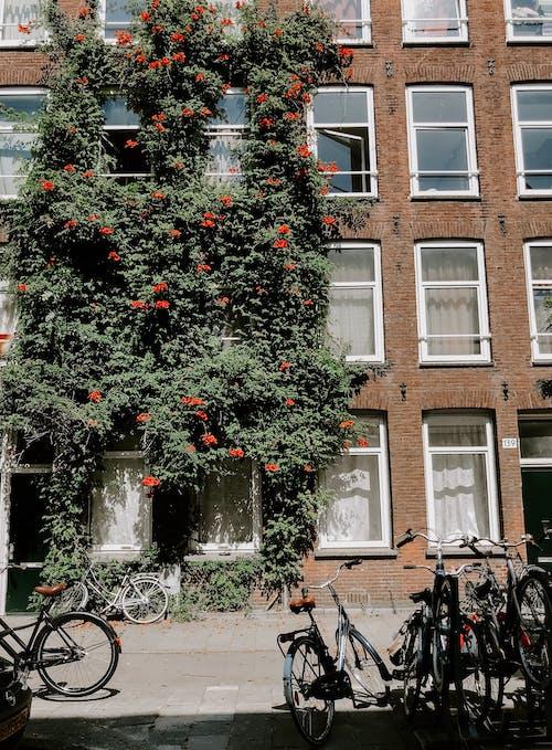 Kostenloses Stock Foto zu amsterdam, bauwerk, blühende plfanzen, dunkelgrüne pflanzen