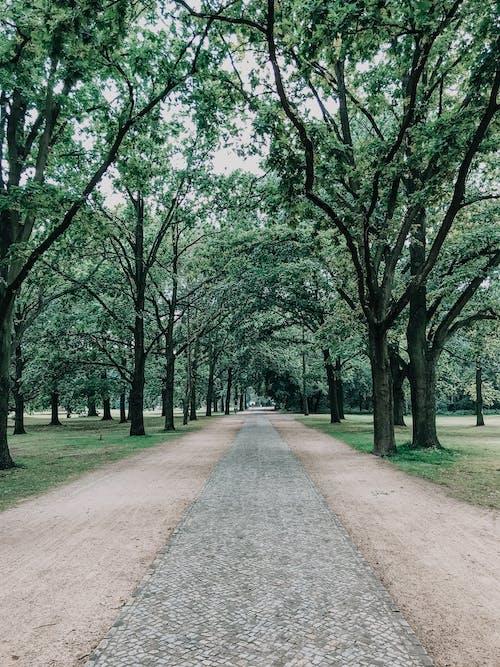 Foto d'estoc gratuïta de a l'aire lliure, arbres, baguls, branques