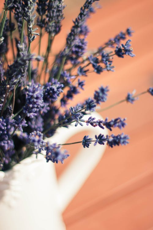 Foto stok gratis Bahasa Inggris, biru, Budidaya Bunga, bunga lavender