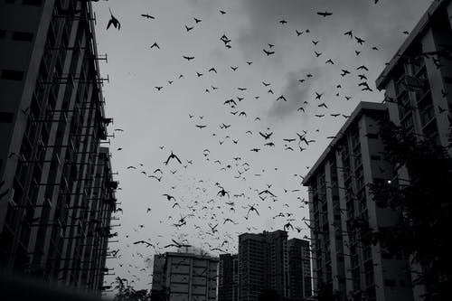 Kostnadsfri bild av byggnader, fåglar, silhuett, svartvitt