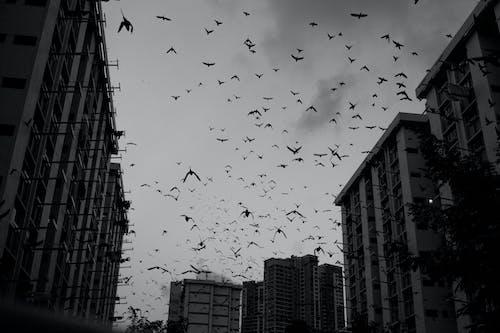 Gratis arkivbilde med bygninger, fugler, silhuett