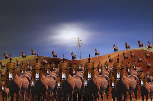 Δωρεάν στοκ φωτογραφιών με άλογα, στρατός, χαμένος
