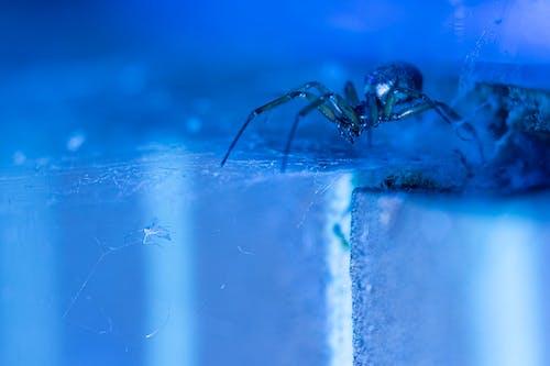 Gratis stockfoto met abstract, angstaanjagend, beest, blauw