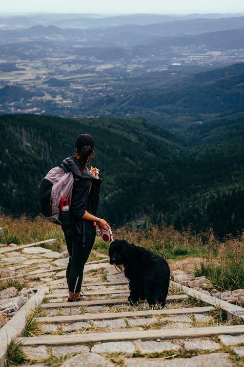 Gratis lagerfoto af aktiv, autentisk, bjerge, dyr