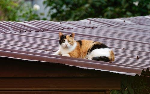 Darmowe zdjęcie z galerii z dach, drzewa, garaż metalowy, koci