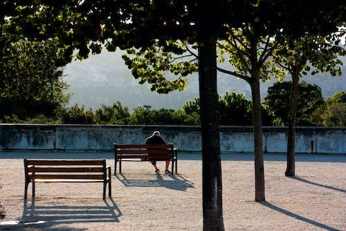 Foto profissional grátis de ao ar livre, árvores, assento, de madeira