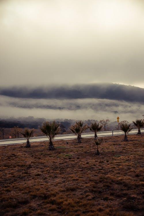 冬季, 国家植物园堪培拉, 多雲的天空, 景觀 的 免费素材照片