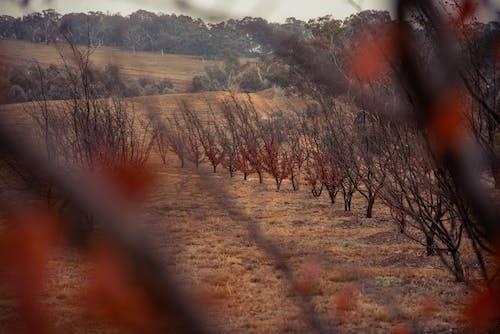 Foto d'estoc gratuïta de arboretum nacional de canberra, arbres, atracció, bici
