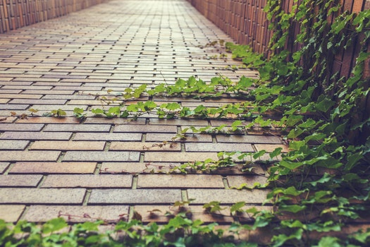 Free stock photo of nature, path, plants, grow rampant