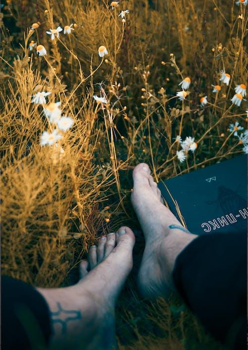 Gratis stockfoto met bloemen, boom, dageraad, gras