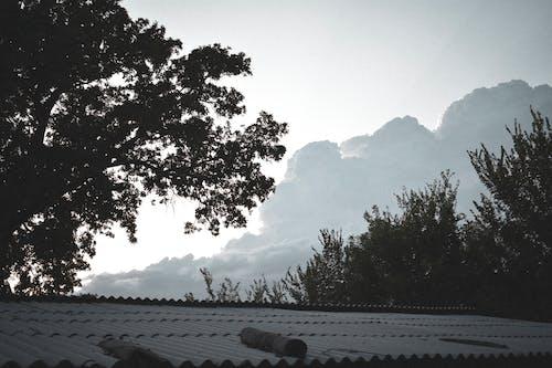 Foto stok gratis alam, atap, eik, langit