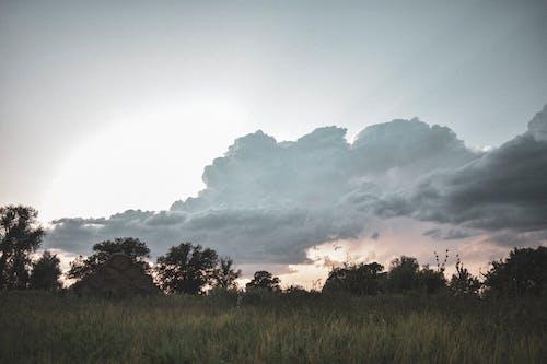 Безкоштовне стокове фото на тему «дерева, небо, Природа, трава»