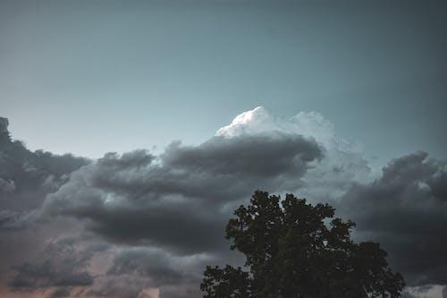 Безкоштовне стокове фото на тему «дерево, небо, хмари»