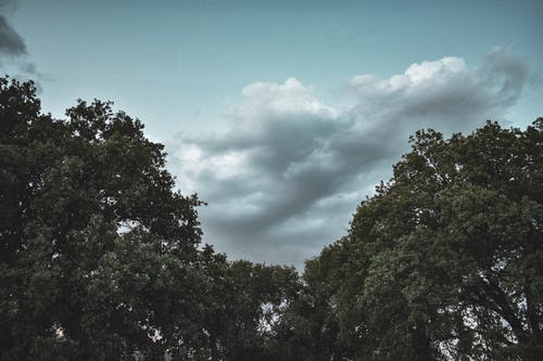 Foto stok gratis alam, awan, langit, pohon