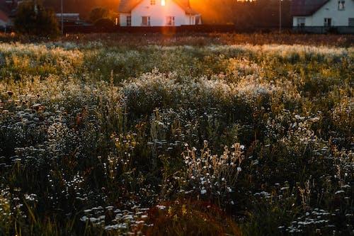 Photos gratuites de clairière, fleurir, fleurs, herbe