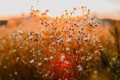 Desktop Background Pictures Nature