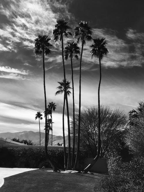 Photos gratuites de aube, coucher de soleil, crépuscule, échelle des gris
