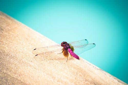 Foto d'estoc gratuïta de aigua blava, ala de libèl.lula, billar, blau