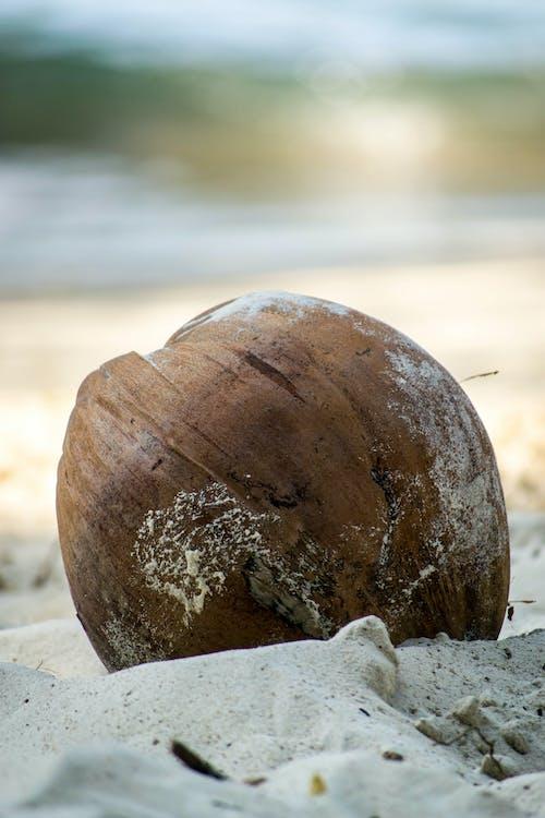Ingyenes stockfotó fehér homok, homok-strand, kókuszdió, nap témában