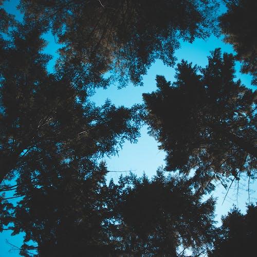 Foto profissional grátis de abeto, árvore, azul, bebê azul