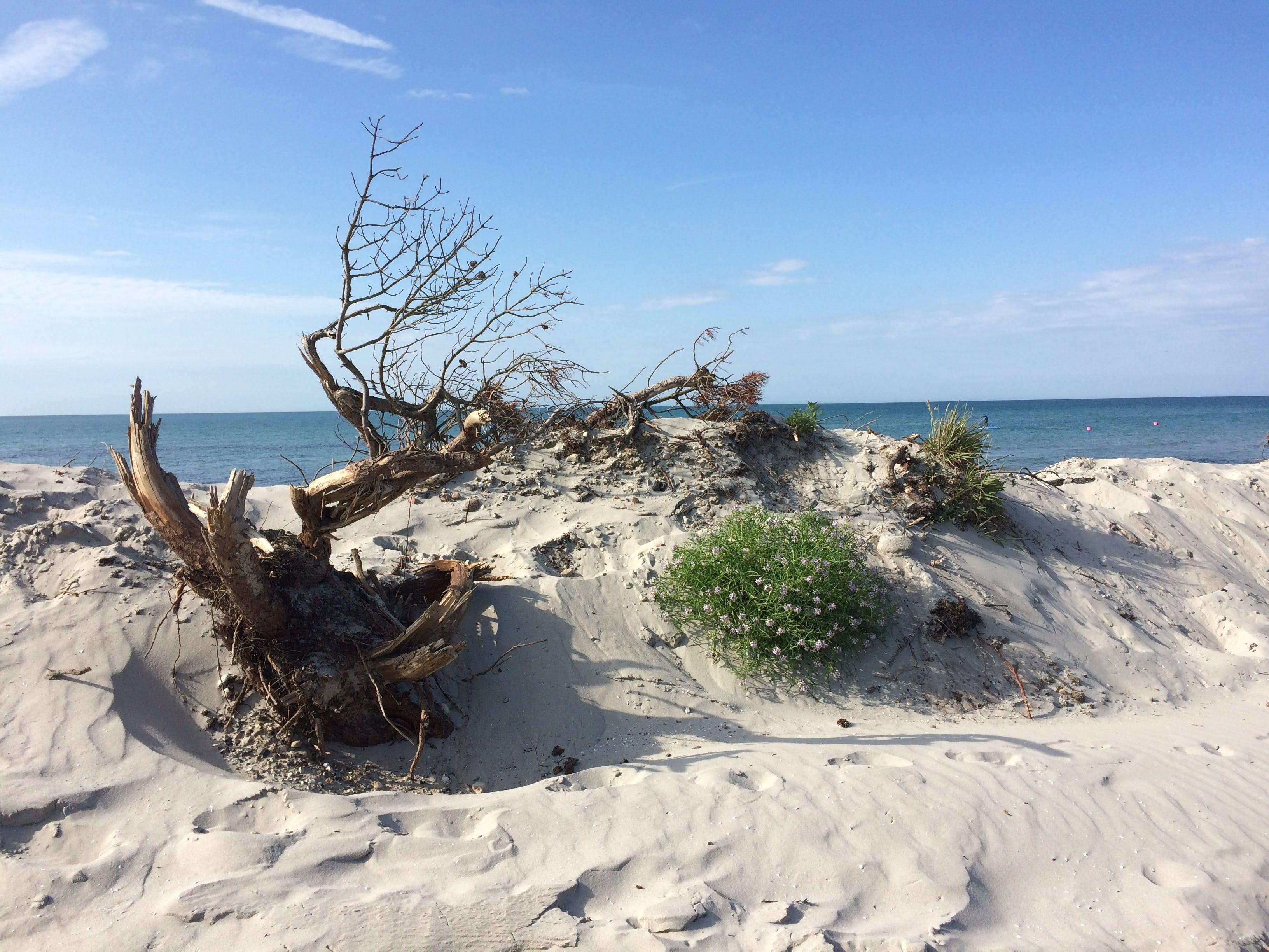 Free stock photo of beach, nature, no stress