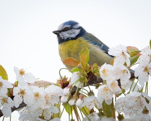 คลังภาพถ่ายฟรี ของ ก้าน, ขนาดเล็ก, นก, นกติ๊ดสีน้ำเงิน