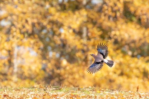 Gratis stockfoto met achtergrond, beest, birdwatching, blauw
