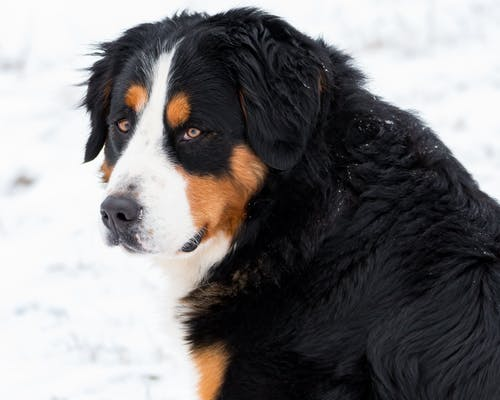 Gratis stockfoto met beest, buiten, enorm, hond