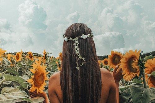 alan, ayçiçeği tarlası, ayçiçekleri, bitki örtüsü içeren Ücretsiz stok fotoğraf