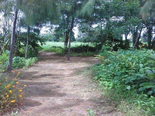Free stock photo of สวนสมุนไพร