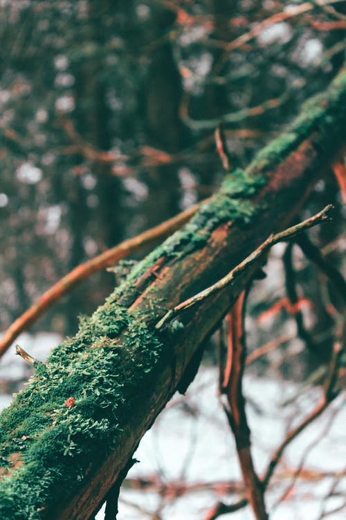 Free stock photo of algae, bokeh, branch, branches