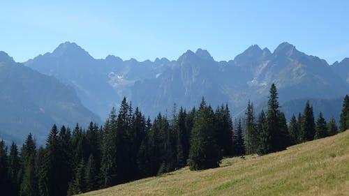 Kostnadsfri bild av bergstoppar, glänta, höga tatra