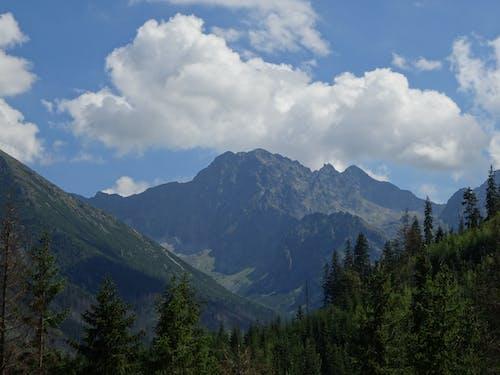 塔特拉山, 山頂 的 免費圖庫相片