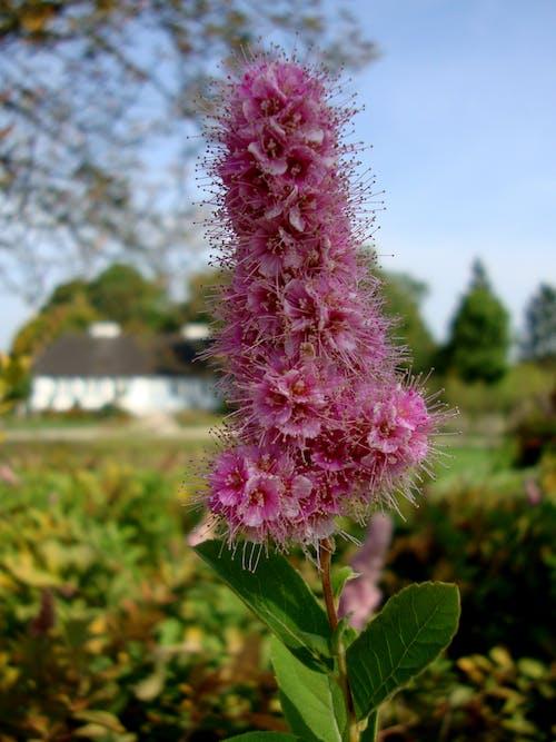 春天, 紫色的花朵 的 免費圖庫相片