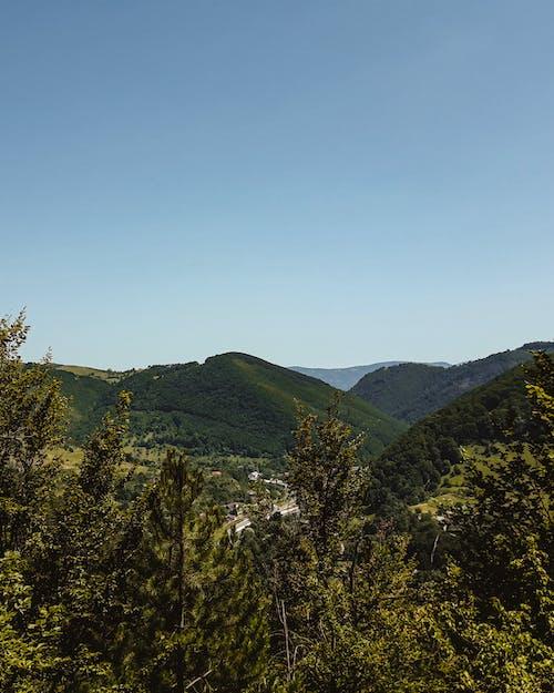 Foto stok gratis pegunungan, pohon