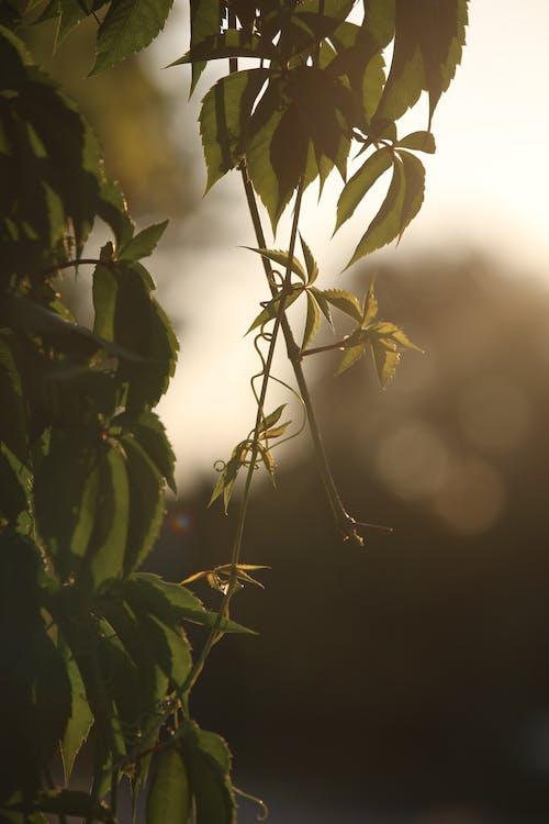 Foto d'estoc gratuïta de a l'aire lliure, arbre, branca, cànem