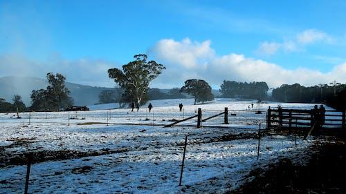 Immagine gratuita di campi, cancello, ciocca, freddo