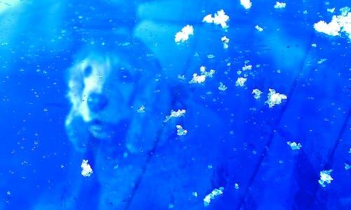 Immagine gratuita di animale, auto, cane, neve