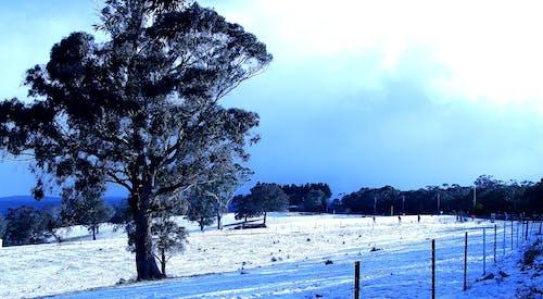 Immagine gratuita di albero, freddo, neve, ostacolo