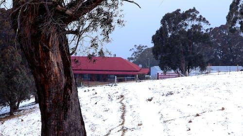 Immagine gratuita di abbaiare, albero, fattoria, neve