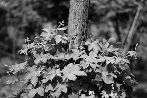 Безкоштовне стокове фото на тему «квітка, монохромний, чорно-білий»