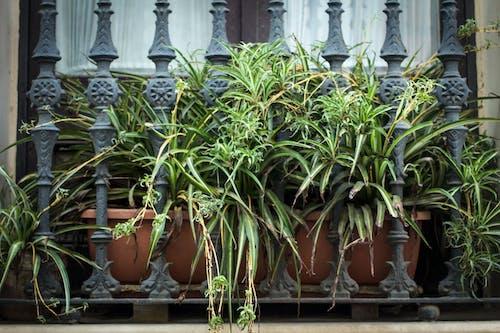 Foto stok gratis alam, barcelona, jendela, kota