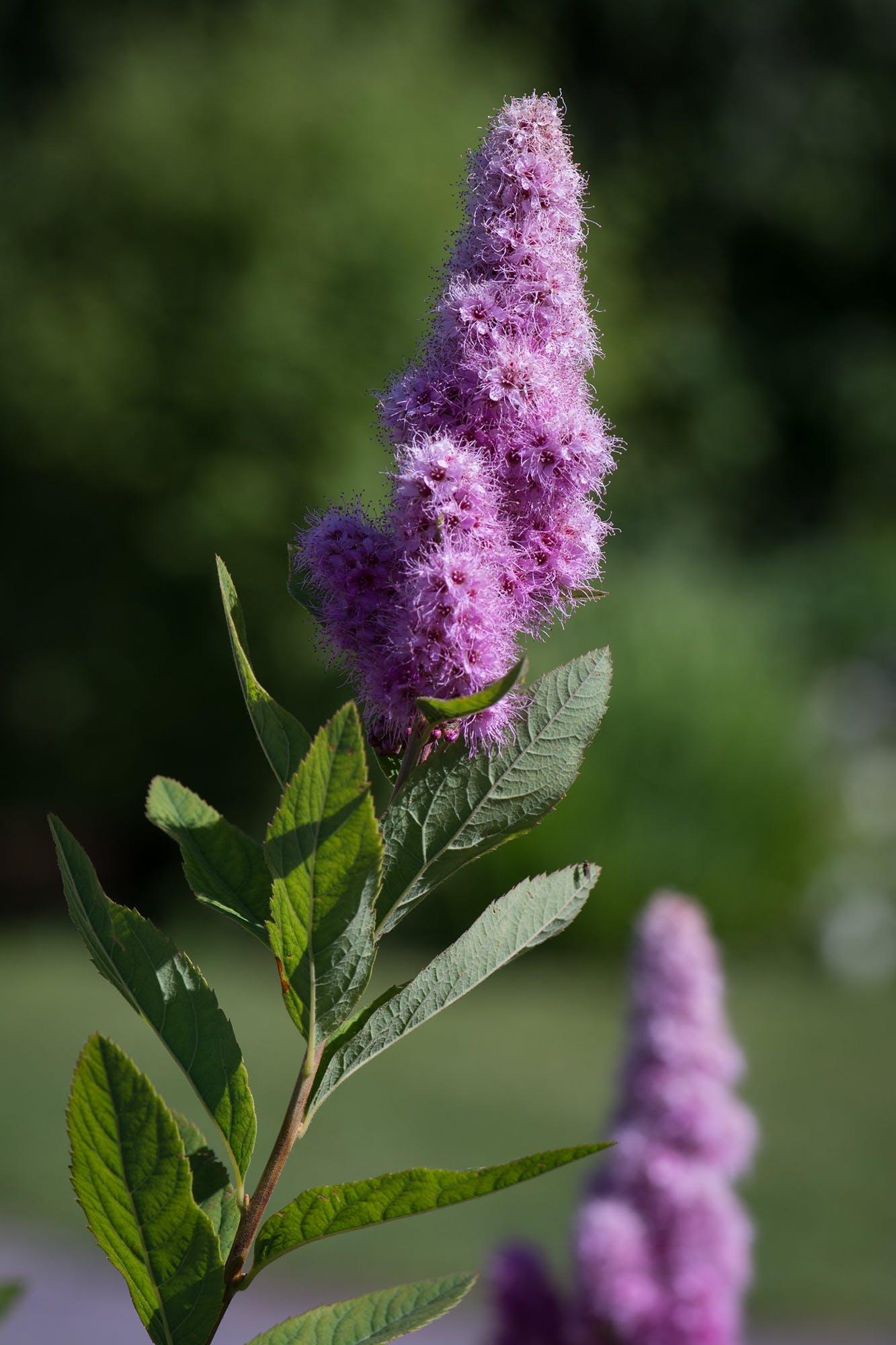 Free stock photo of nature, flowers, summer, bush